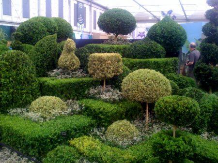James Crebbin-Bailey's winning Chelsea topiary garden