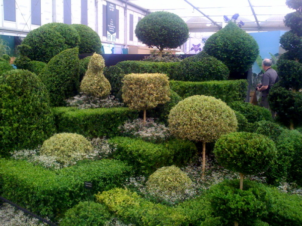 RHS Chelsea 2012, Topiary Arts, Gold Medal