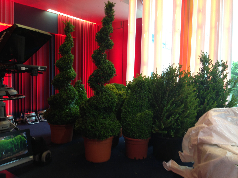 Topiary in the One Show Studio for their front garden topiary item
