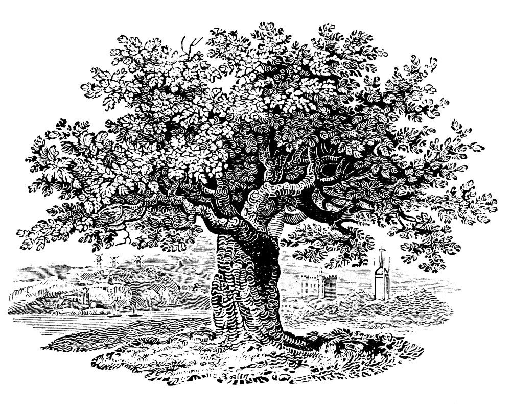 'The Tree' an engraving by Thomas Bewick