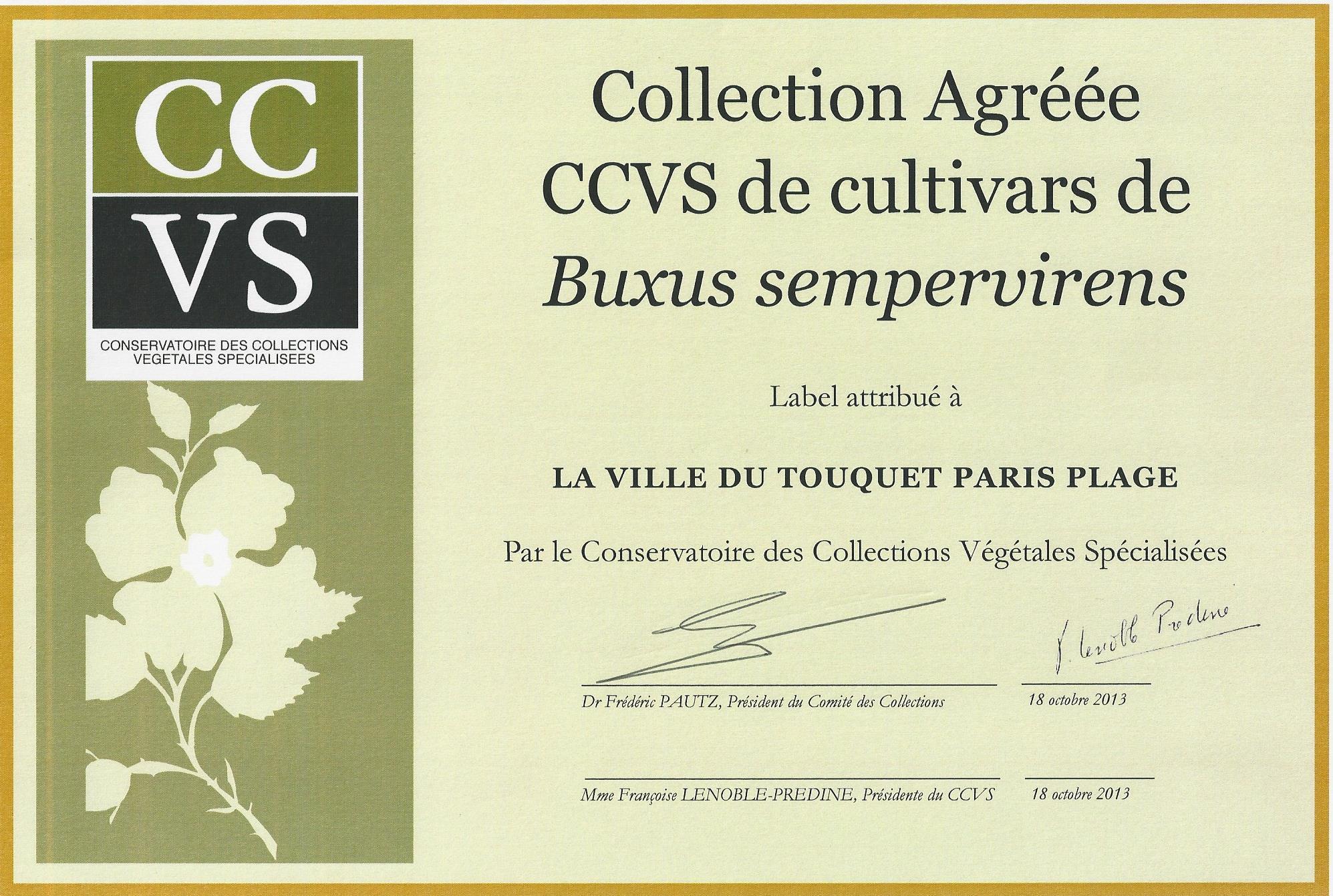 CCVS Certificate