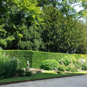 20150703 Bramham Park - one of the borders backed with a Yew and Beech headge