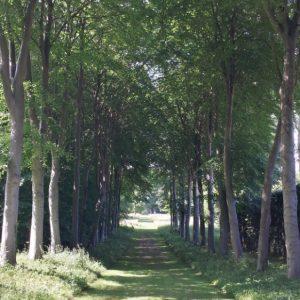 20150703 Bramham Park - one of the tree lined walks
