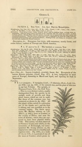 Click on the image to view the page on Yew in 'Aboretum et Fuiticetum' - Image from the Biodiversity Heritage Library.  Digitized by California Academy of Sciences.