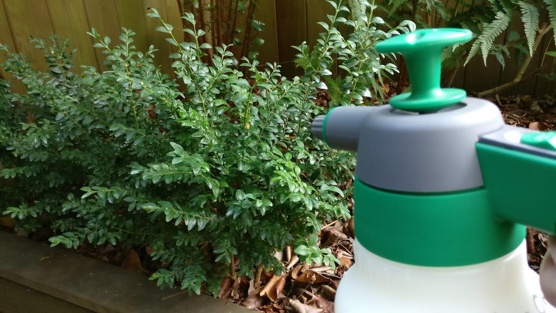 Topbuxus HealthMix Spraying