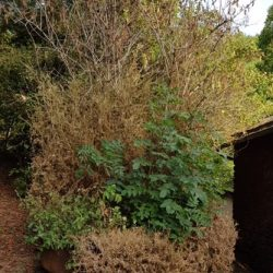 Garden Topiary 3