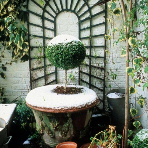Noel - London garden designer noted for small gardens - 2a
