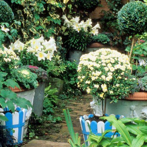 Noel - London garden designer noted for small gardens - 3