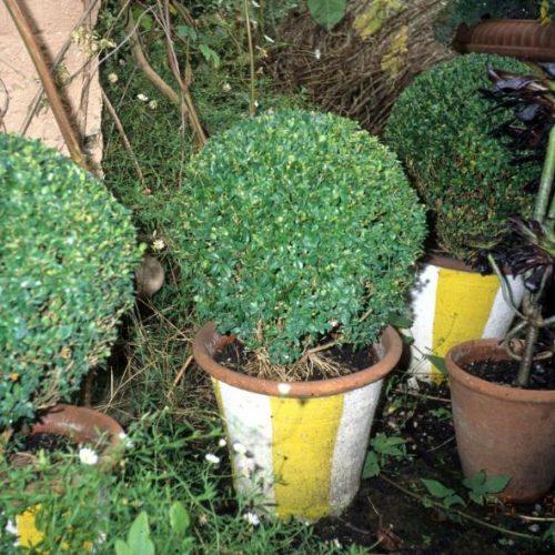 Noel - London garden designer noted for small gardens - 4