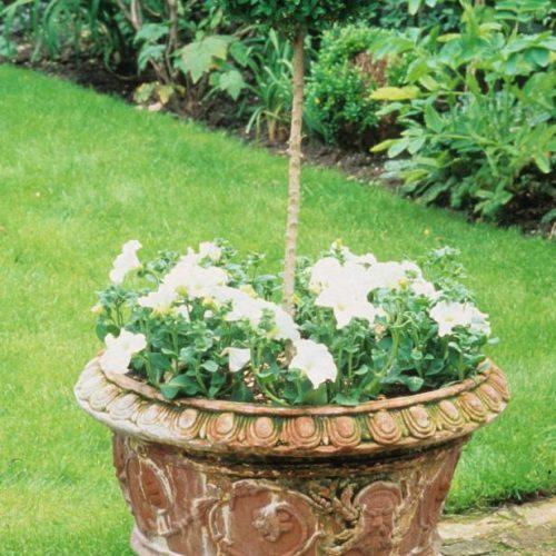 Noel - London garden designer noted for small gardens - 5