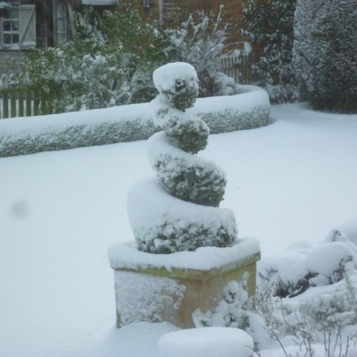 Sarratt - Hertfordshire - UK - Winter 2009 - Boxwood (Buxus sempervirens) hedging and spiral in the snow - Domestic Garden