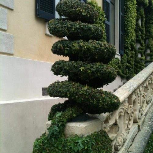 Villa del Balbianello - Lenno - Lake Como - Italy - May 2014 - Ivy (Hedera helix) woven around a lamp standard