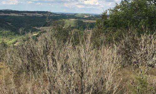 Aveyron 04