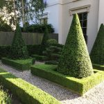Yew Cones and Box Hedging
