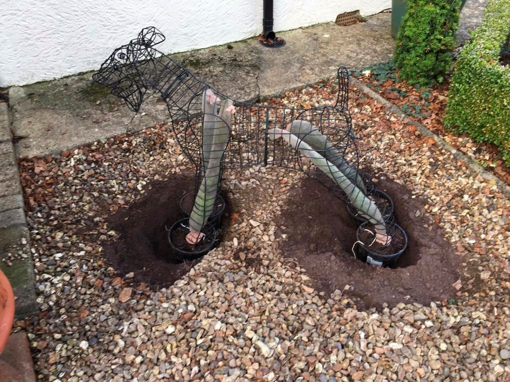 My subsoil is Cotswold brash, free-draining and supports Taxus sp. well. I prepared large holes using topsoil purchased from a garden centre, firmed and watered well.The assembled animal was carried to the prepared site and lowered into the holes.