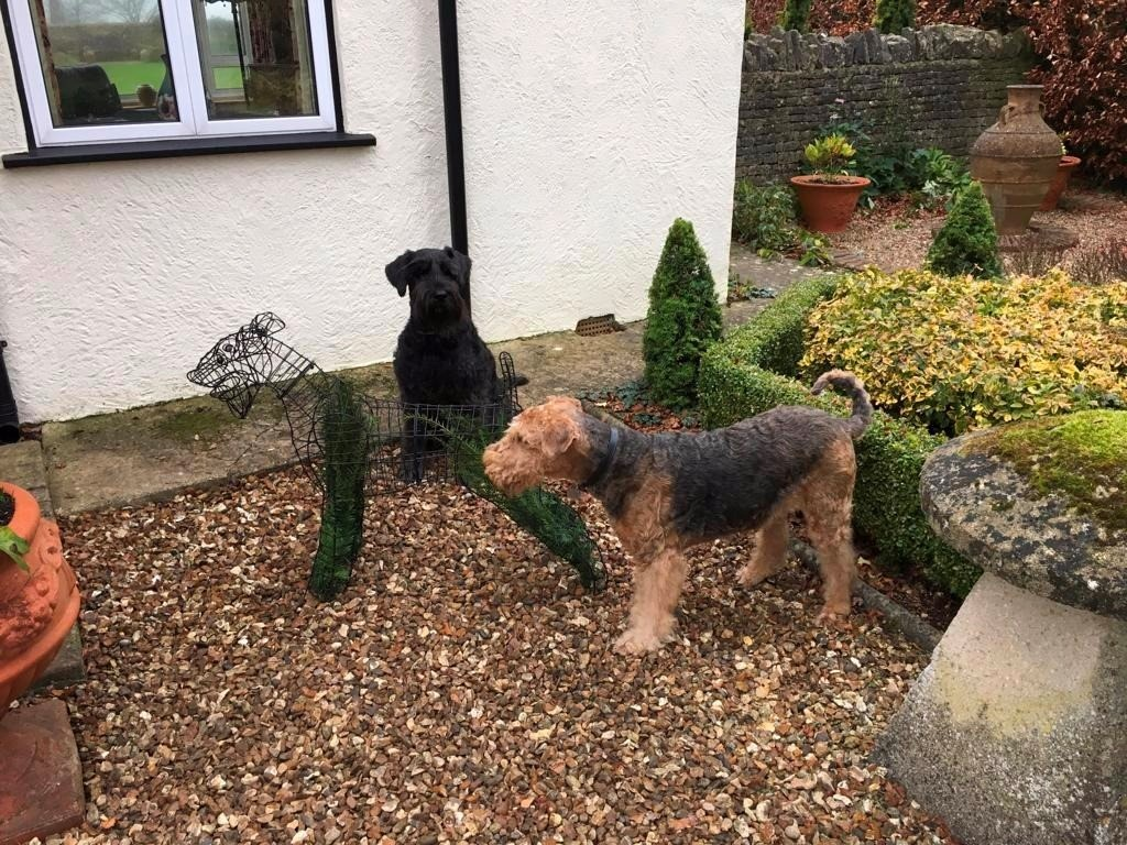 My Airedale wasn't overly impressed and didn't oblige with her usual photogenic stance.
