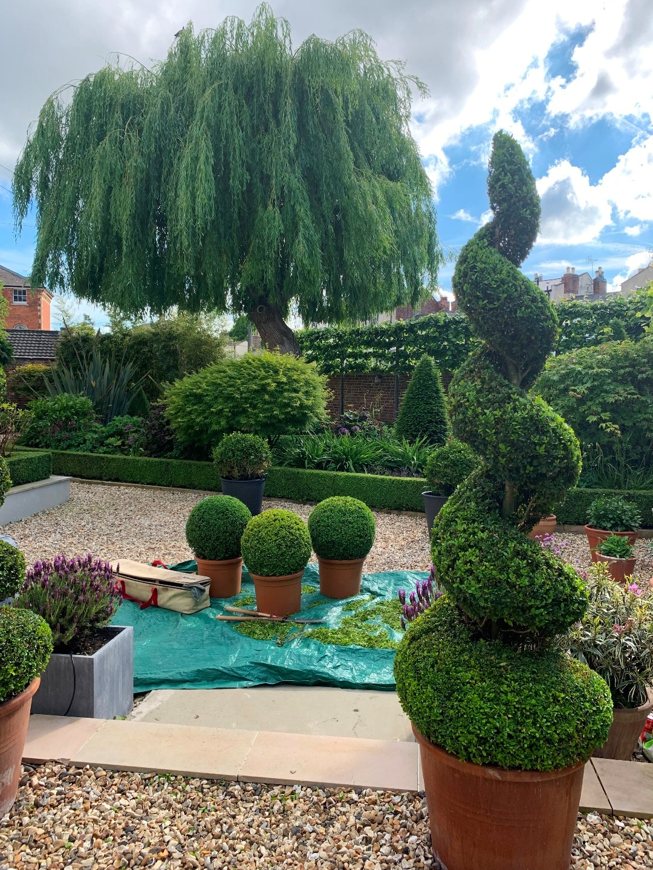 Buxus balls, spirals, cones and hedging