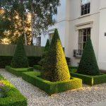 Yew cones and Buxus parterres