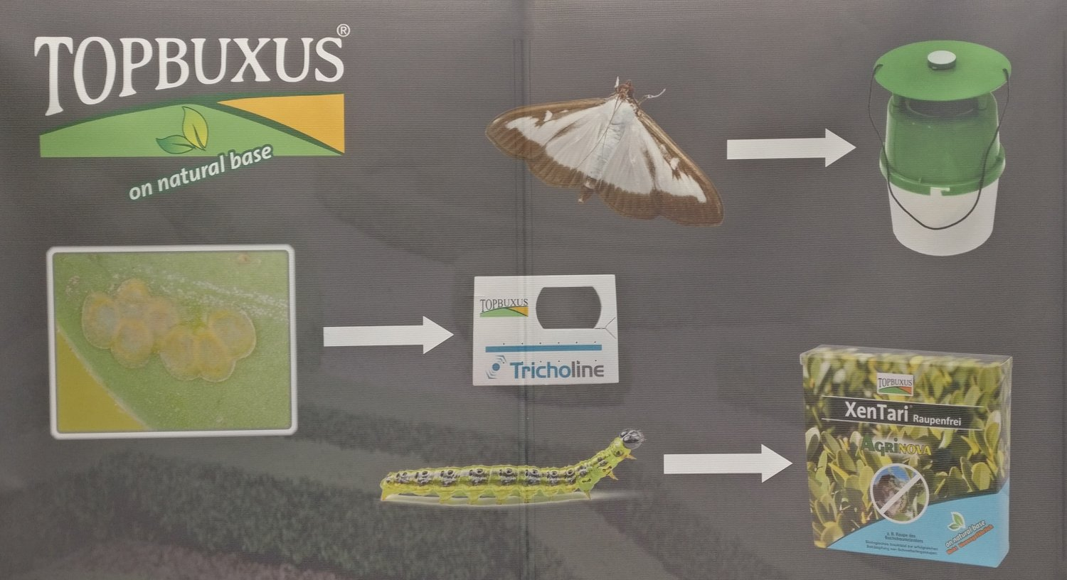 TopBuxus Garden Press Event banner for Box Tree Moth & Caterpillar products