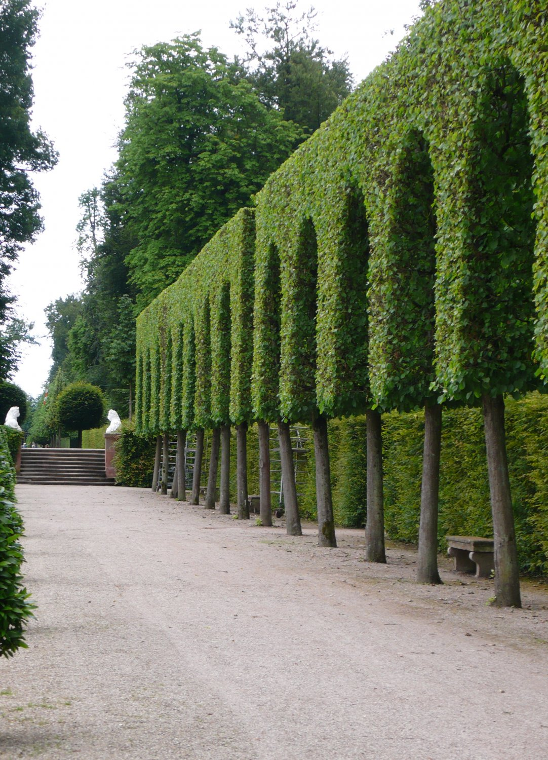 Hedge on stilts borders Orangery parterre