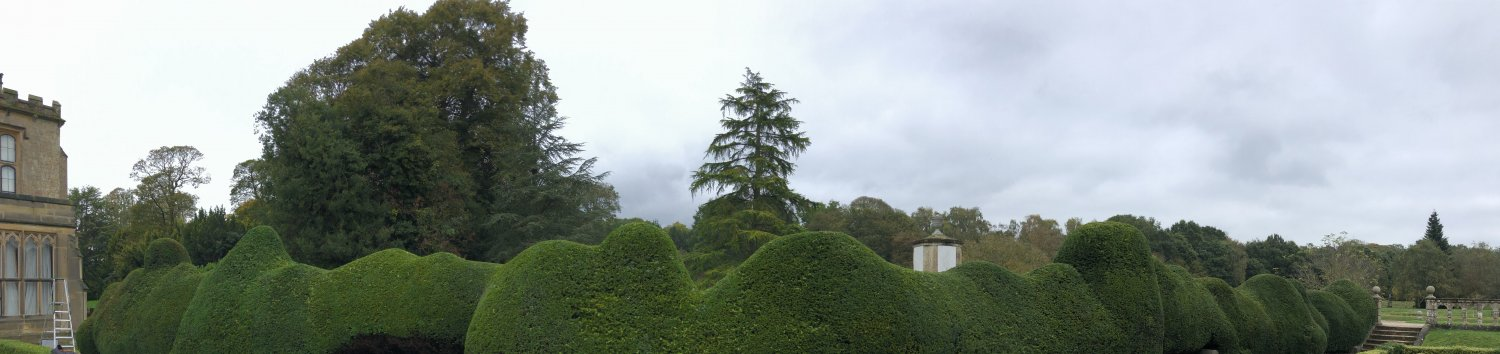 A panoramic of the whole Yew from in the Spanish Garden