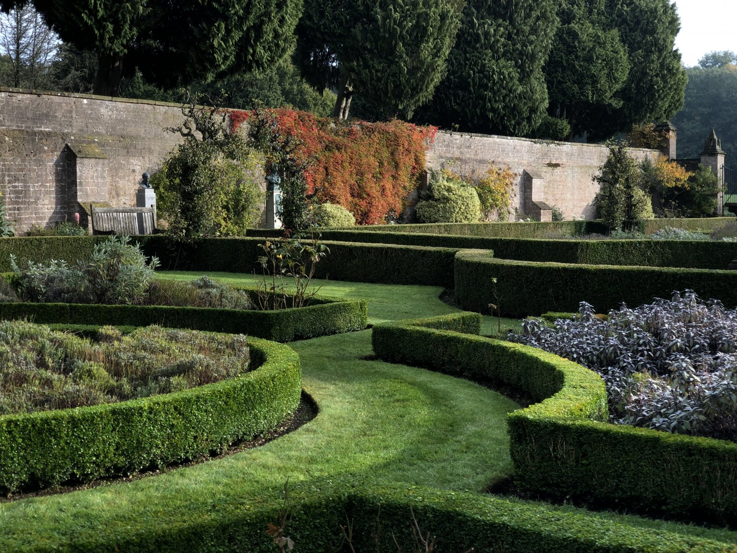 The Small Walled Garden Buxus Parterre after a clipping this season - currently training areas to re-grow