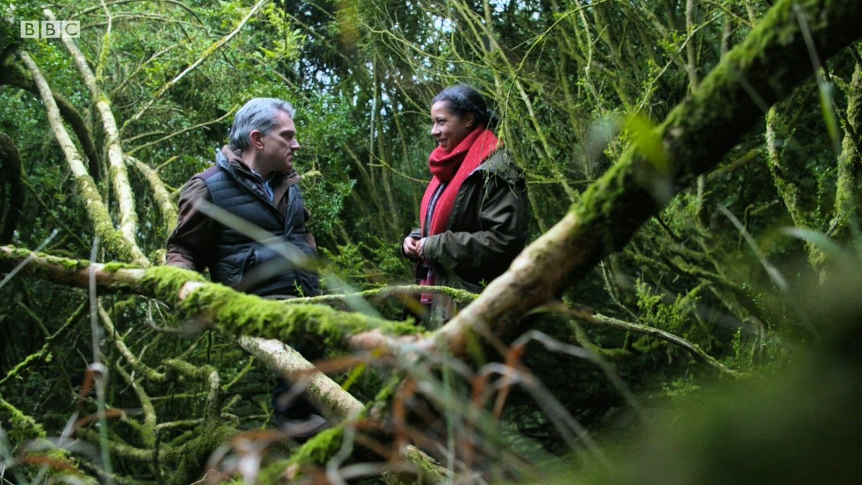 BBC Countryfile talks boxwood