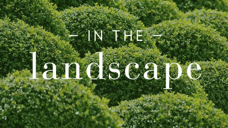 In The Landscape HL