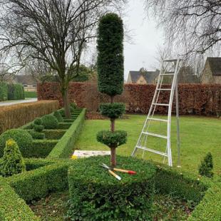 Lyndas Topiary 3