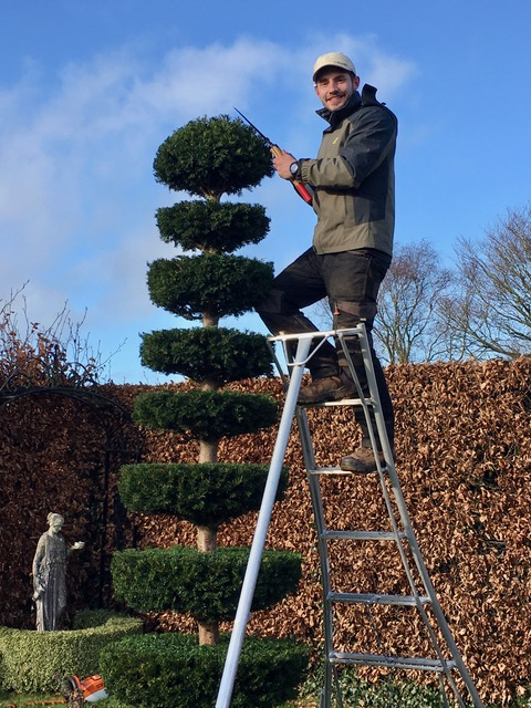 Thomas Chamberlain clipping a yew topiary