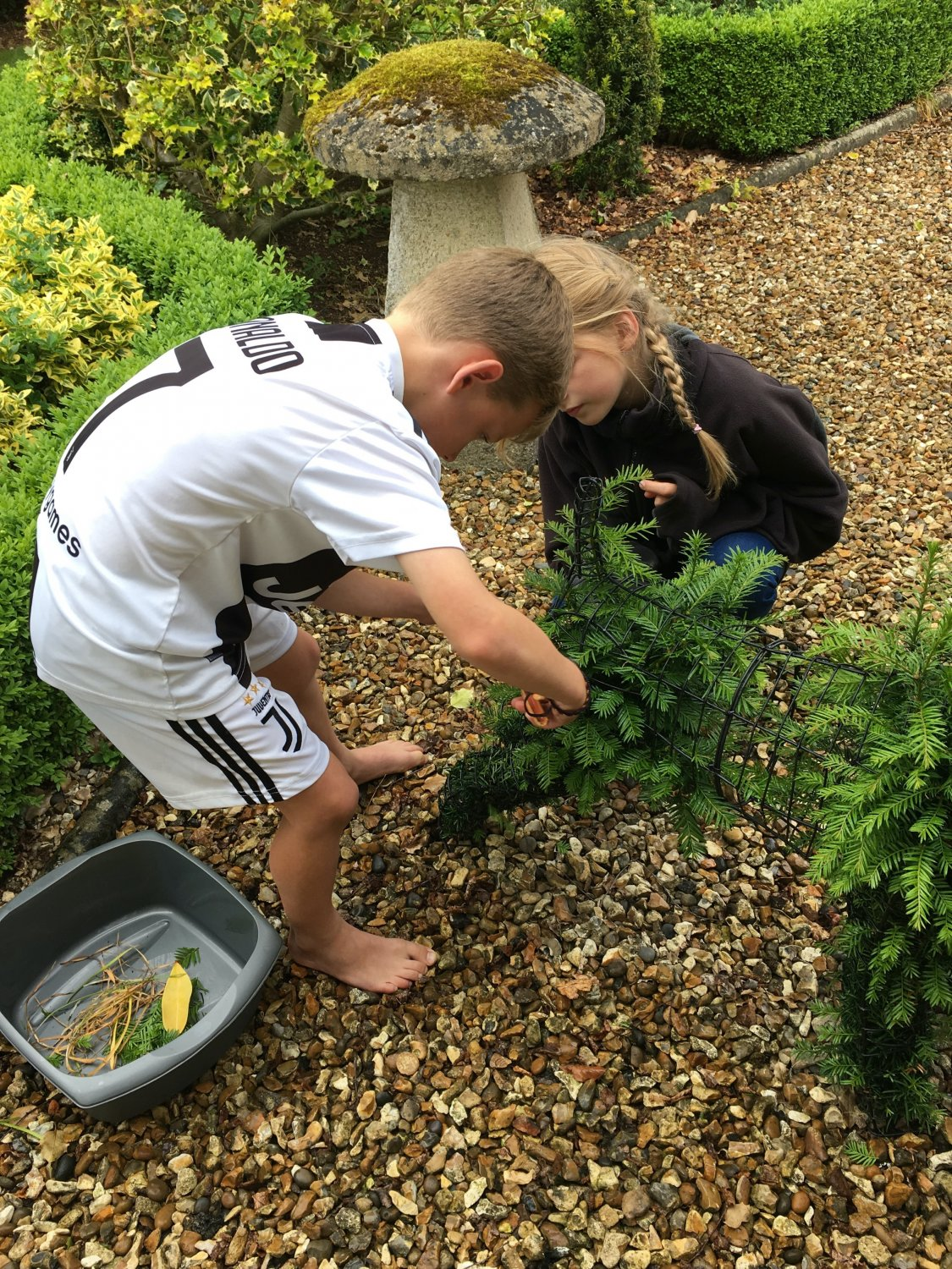 My two eldest grandchildren were keen to have a go, so as we need to encourage budding topiarists, I let them loose with ARS pruning snips.