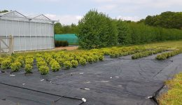 RHS Field Research Facility Deers Farm Surrey - Box trials - HL