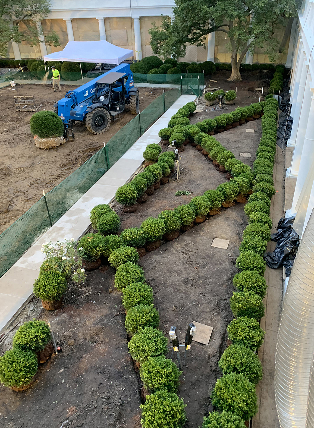 Installing NewGen Independence® boxwood parterre hedges at theWhite House Rose GardenPhoto by White House Photo Office